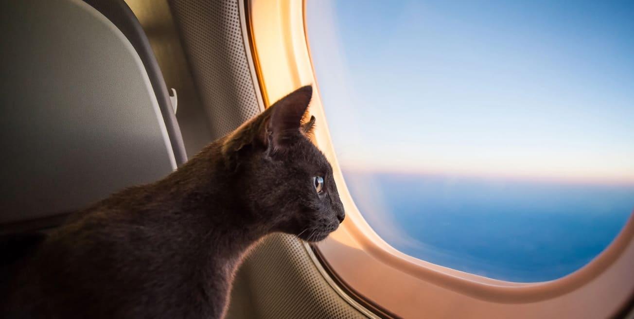 Путешествуем с животными