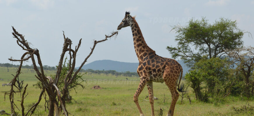 Национальные парки в Кении