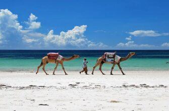 Что нужно знать туристы перед поездков в Кении